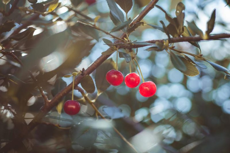 Fruits Of Contemplation – Mindful Action